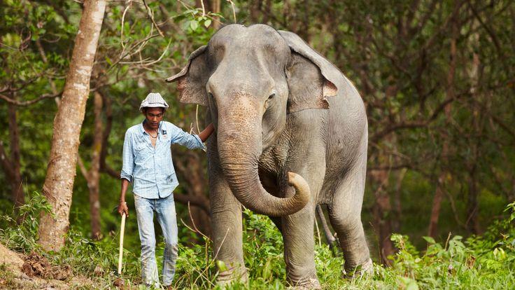 Elephant trekking ban: is it a grey area? | Adventure.com https://adventure.com/elephant-trekking-riding-ban/?utm_campaign=crowdfire&utm_content=crowdfire&utm_medium=social&utm_source=pinterest