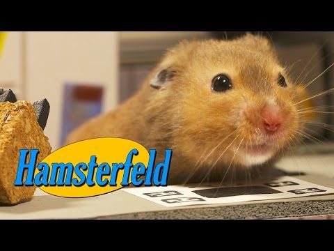 VIDEO: Someone (Brilliant) Let Hamsters Run Around A Tiny Seinfeld TV Set   Armstrong and Getty   Talk 650 KSTE