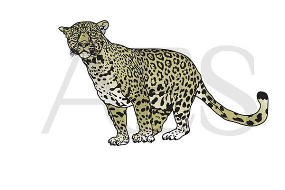 Jaguar: vector illustration digital download by AeshnidaeAesthetics on Etsy