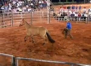 Pesquisa Como fazer doma gentil de cavalos. Vistas 18523.