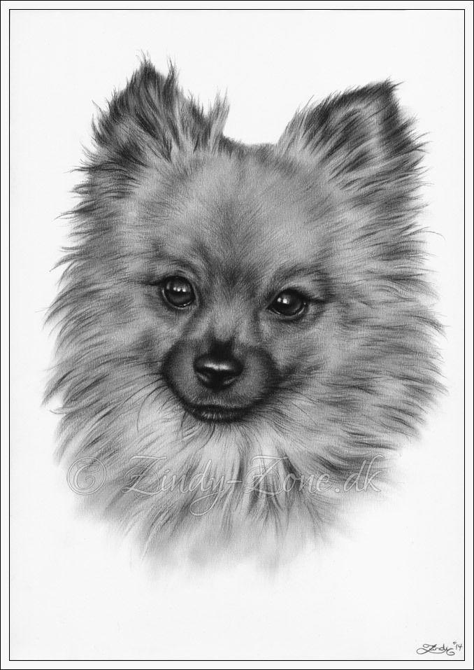ACEO Print Pomeranian Dog Animal Cute Sweet Puppy Love Pet Canine Zindy Art