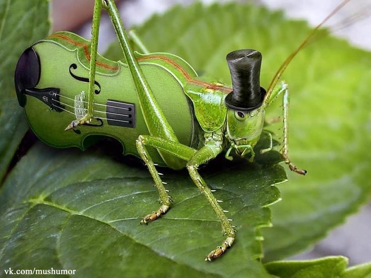 Serenade...
