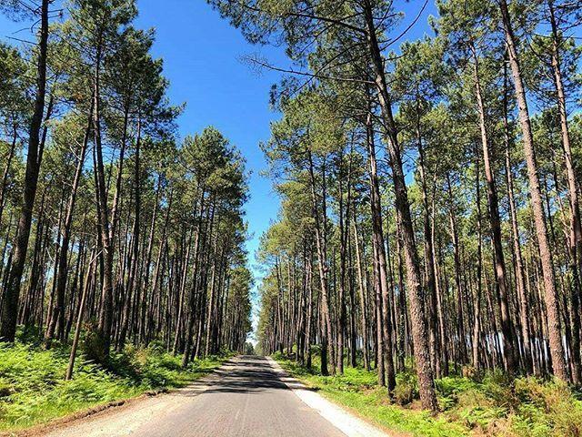 On Prend La Route Des Landes Pour Les Prochaines Vacances Vivement Le Printemps Marie2sousa Repost Aquitaine Nelleaquitai Country Roads Road Country