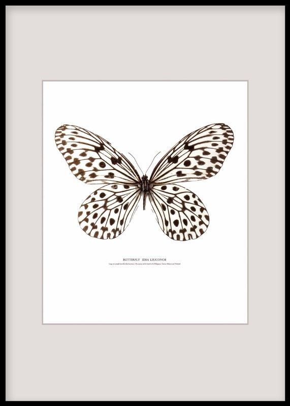 Posters and prints with butterflies. Nice in a gallery wall.