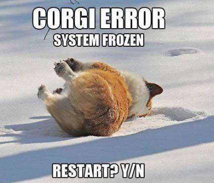 corgi meme error system frozen restart