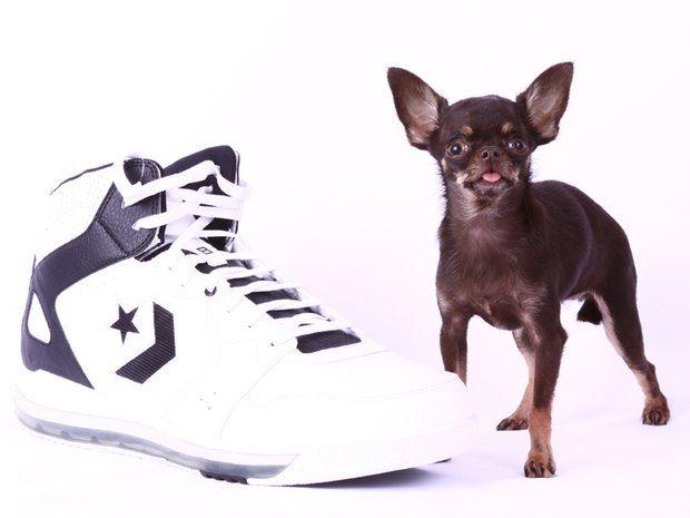 """""""Milly"""", der kleinste lebende Hund"""