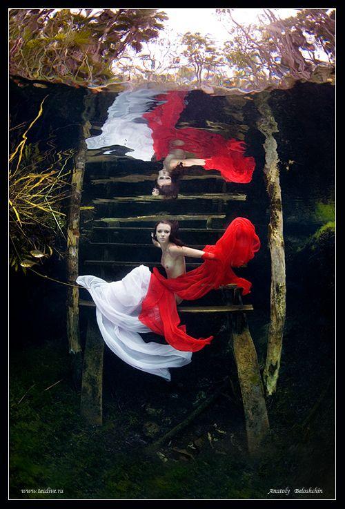 Zena HollowayThe Best of Arty Underwater Photography