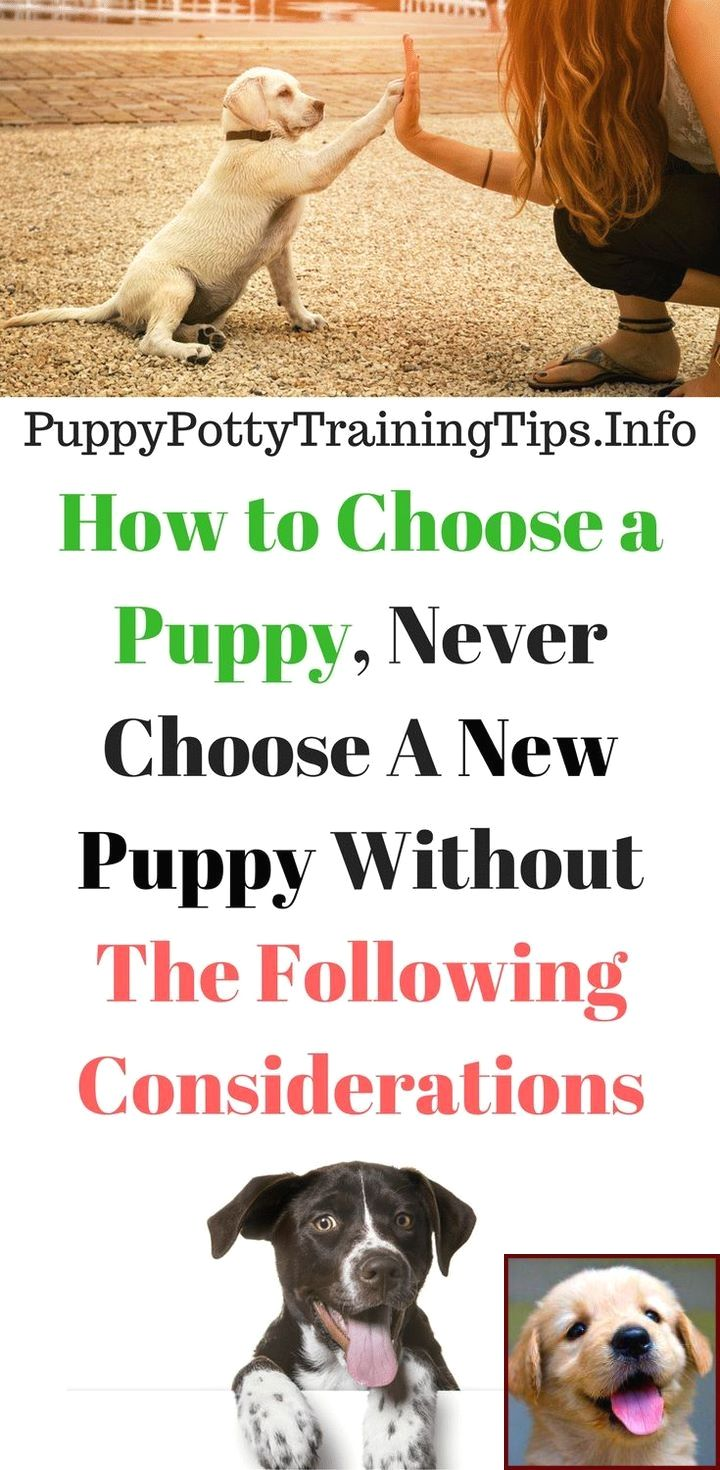 House Training A Puppy From Paper To Outside And Dog Training
