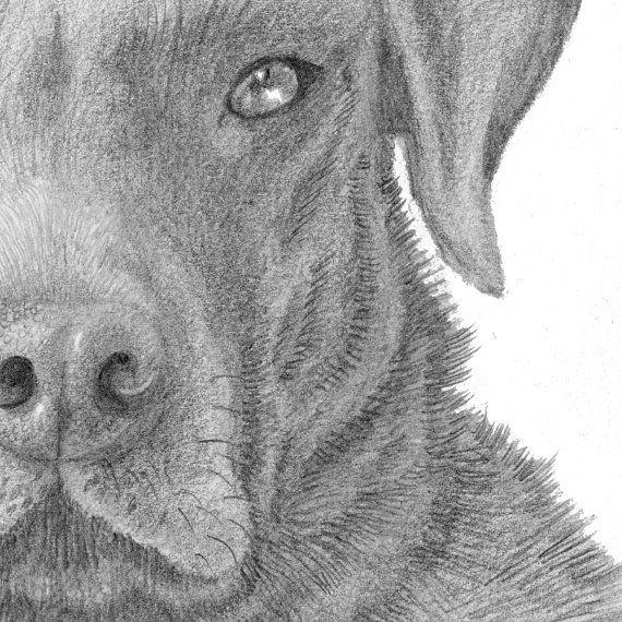Custom Animal Drawing. I'll draw anything by TheKestrelAndTheSea