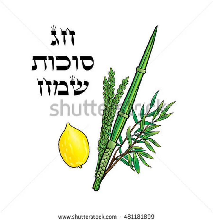 Happy Sukkot Background. Hebrew Translate: Happy Sukkot Holiday. Jewish Traditional Four Species For Jewish Holiday Sukkot. Vector Illustration. - 481181899 : Shutterstock
