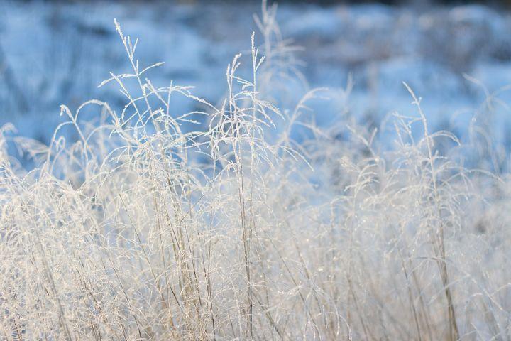 http://starbox.fi/niittykukkia/lumen-taikaa