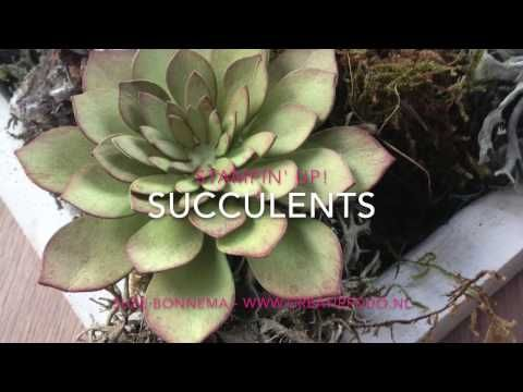 video how to make realistic looking paper succulents Succulents Stampin Up - YouTube Stampin' Up Oh So Succulent 2017 Occasions catalogue