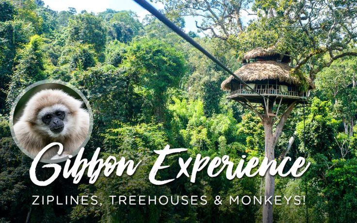 This was one cool experience, staying overnight in the world's tallest treehouses while zip-lining with monkeys!