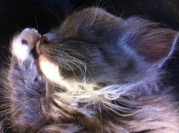 KittyCam!: Hellogiggles Kittens, Adorable Animals, Critter Friends, Cute Cats, Cutie Animals, Cats Φωφ, Coolist Cats