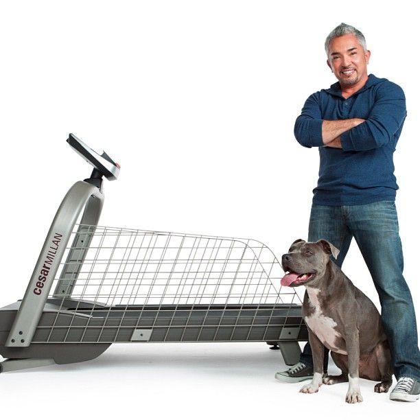 Cesar Millan Dog Training Equipment