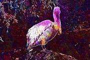 "New artwork for sale! - "" Dalmatian Pelican Pelikan  by PixBreak Art "" - http://ift.tt/2vq8eXd"