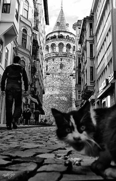 Kitty and Galata Tower... in Istanbul, Turkey