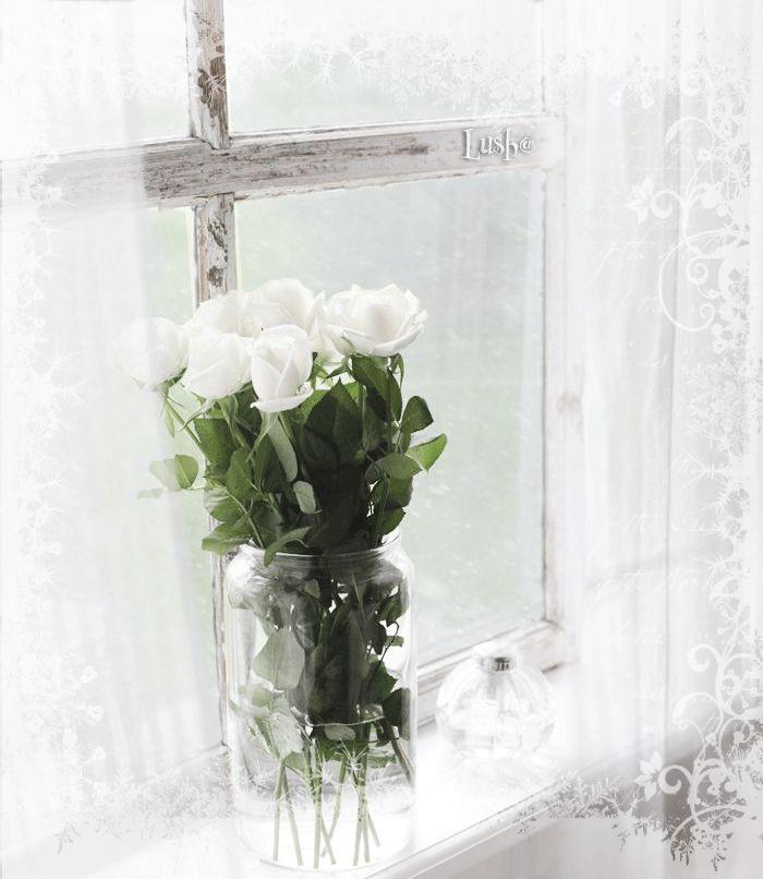 Белые розы на окне картинки