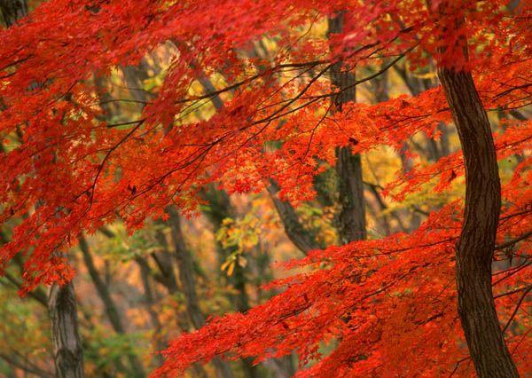 Zgodnie z teorią o wzajemnym oddziaływaniu na siebie pięciu żywiołów – woda, drzewo, ogień, ziemia i metal – wykazują one powiązania z określonymi stronami świata, liczbami, roślinami a także przedmiotami. Takim przykładem jest skalniak reprezentujący żywioł Ziemi a oczko wodne, które jest żywiołem Wody. Według feng shui liczy się forma