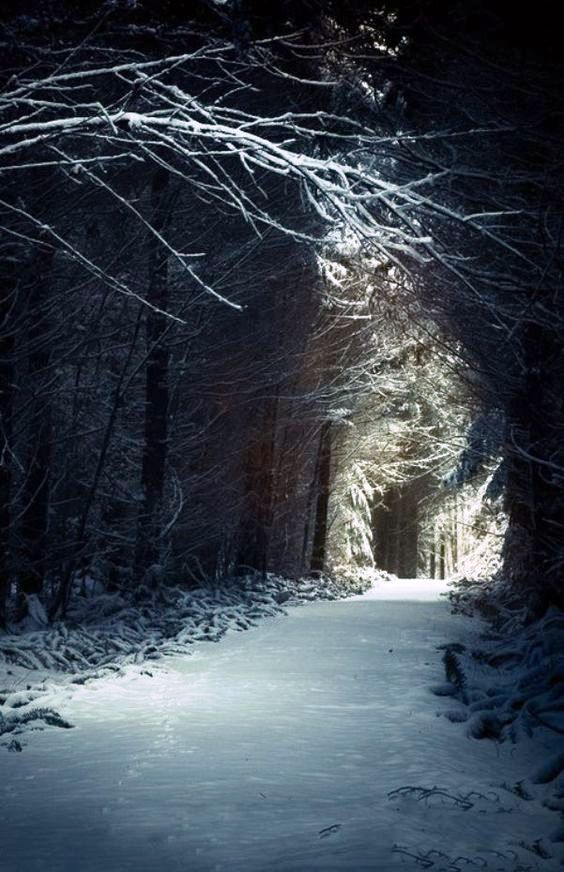 Enchanted Forest, Scotland