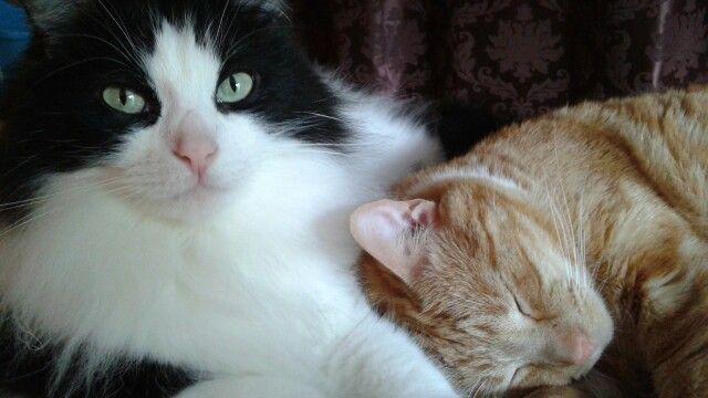 Jacobi&Lulu