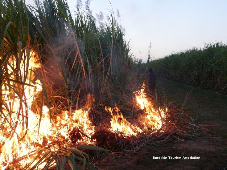 Farmer lighting cane fire at the start of the crushing season. Burdekin, North Queensland.