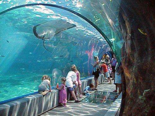 Maui Ocean Center- The Hawaiian Aquarium in Wailuku, Maui,, Hawaii