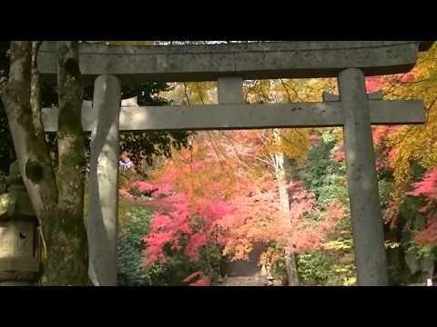 fantastic beautiful autumn leaves 紅葉・智頭町CHIZU紅葉の森(鳥取・智頭町・諏訪神社)