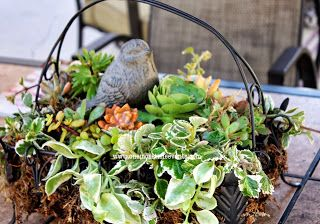 Outdoor Succulent Patio Table Centerpiece