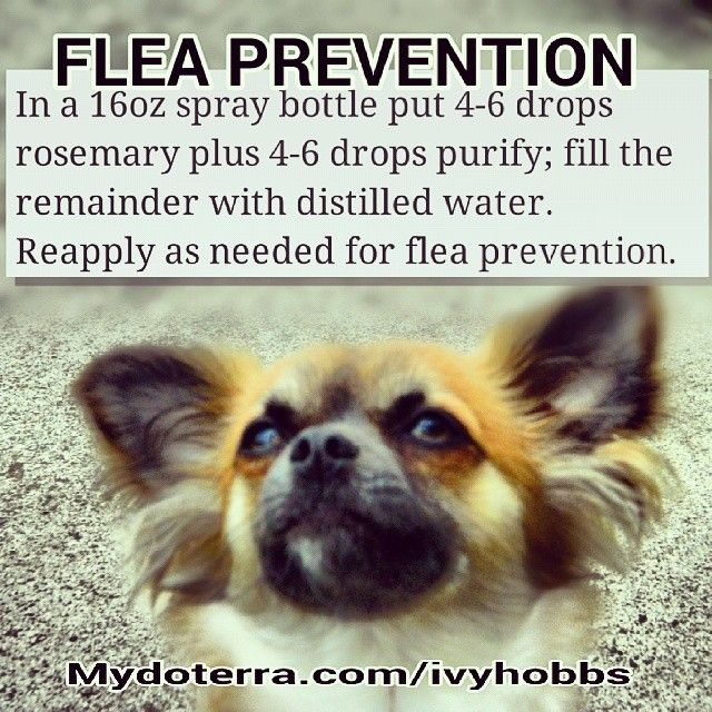 @: Flea Prevention
