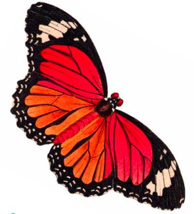 Free printables: Butterfly clip art