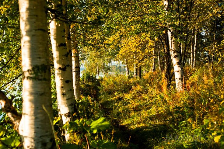 Autumn in Rovaniemi by Jaakko Posti - Finland