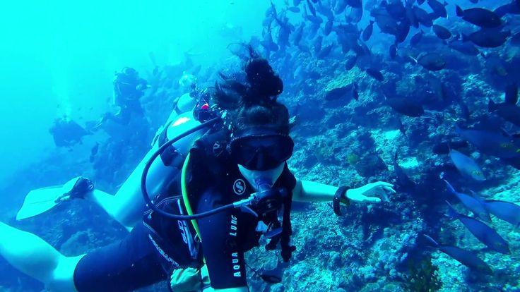Diving Castle Rock in Komodo with Lagaligo Liveaboard