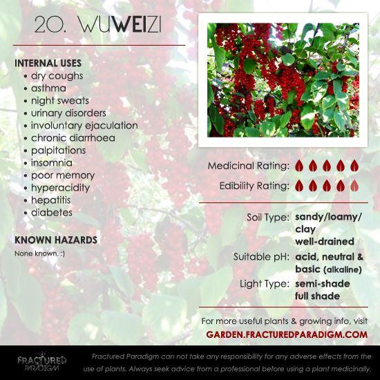 20. Wu Wei Zi – Medicinal Plants for Your Garden