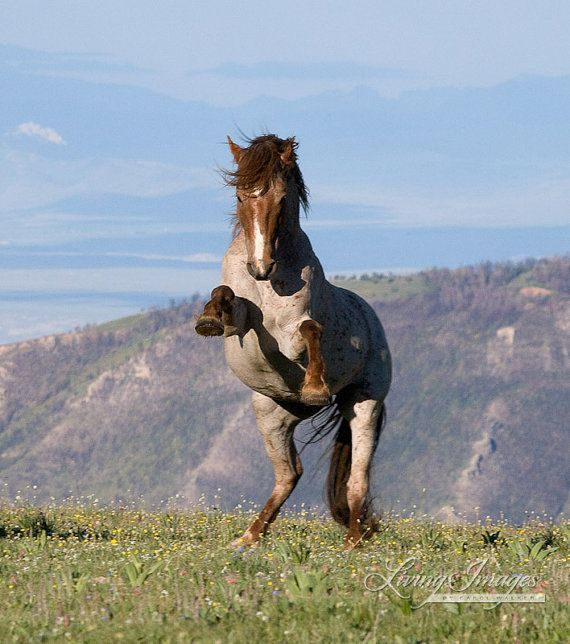 17 Best images about Wild Horses - 63.7KB