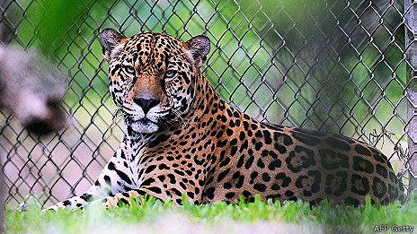 Costa Rica elimina sus zoológicos y los transforma en parques botánicos