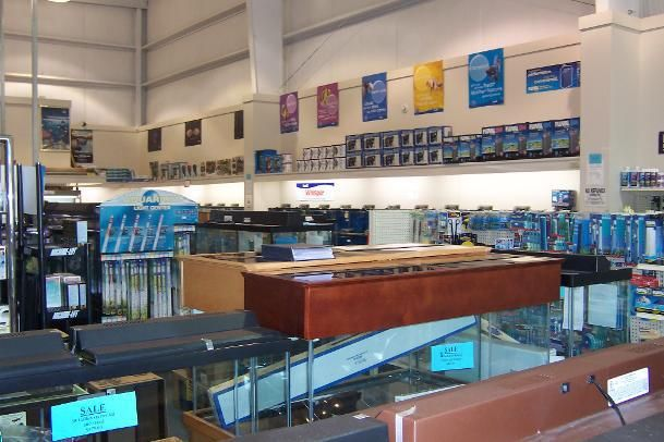 25 best ideas about tropical fish store on pinterest for Salt water fish store