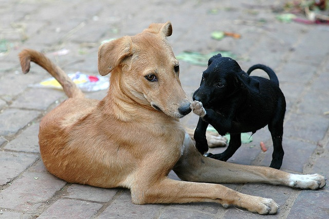 playful street dogs, India