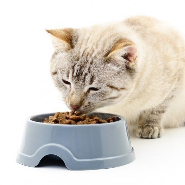 Dieta para gatos obesos - PeritoAnimal