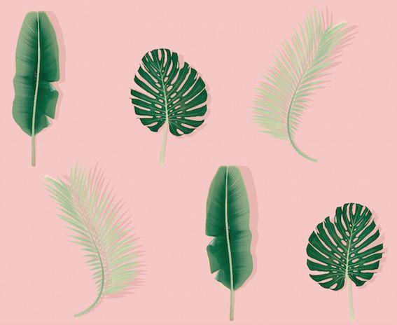 #rumruk #wallpaper #leaves #pinkbackground #green #nature
