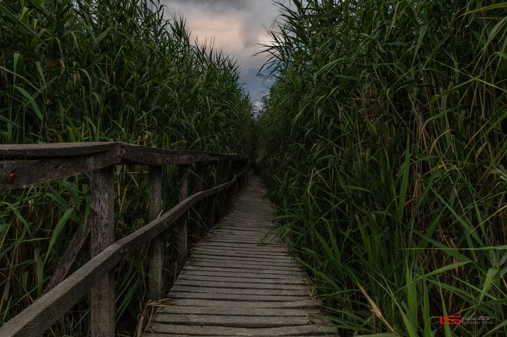 Path on the Moor by Laszlo Som on 500px