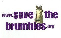 Australian Brumbies – Australian Brumby Alliance Inc.