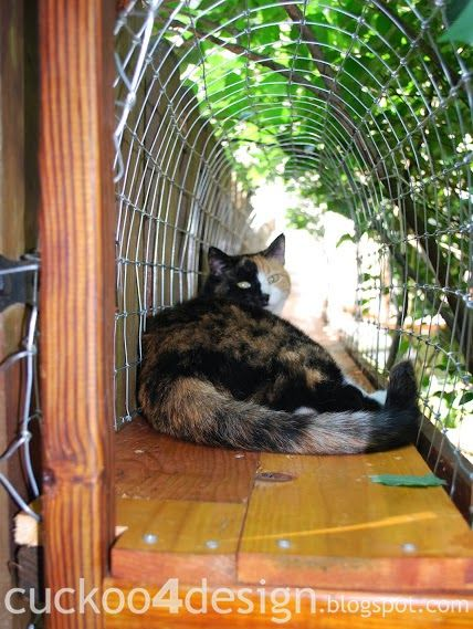 Easy DIY Cat Enclosure and tunnels to keep your city cats happy and safe - Cuckoo4Design