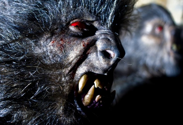 Werewolves are one of the beautiful regulars of the horror screen - here are ten of the best movies that offer them representation.