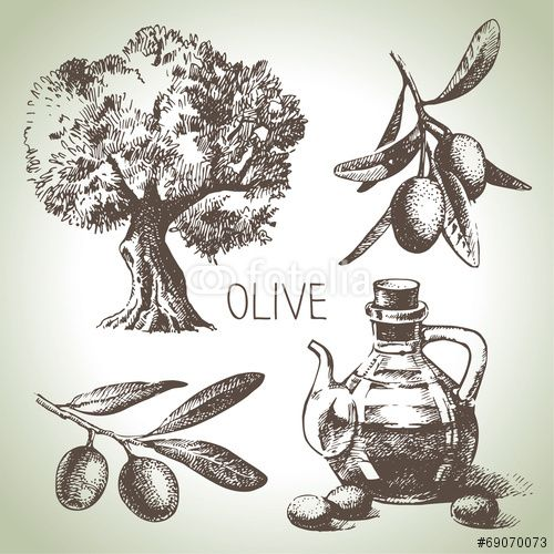 Вектор: Hand drawn olive set