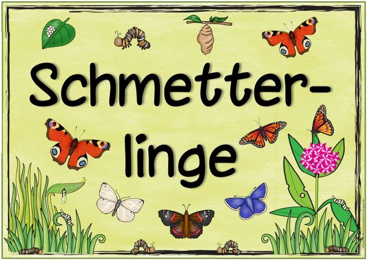 "Ideenreise: Themenplakat ""Schmetterlinge""                                                                                                                                                                                 Mehr"