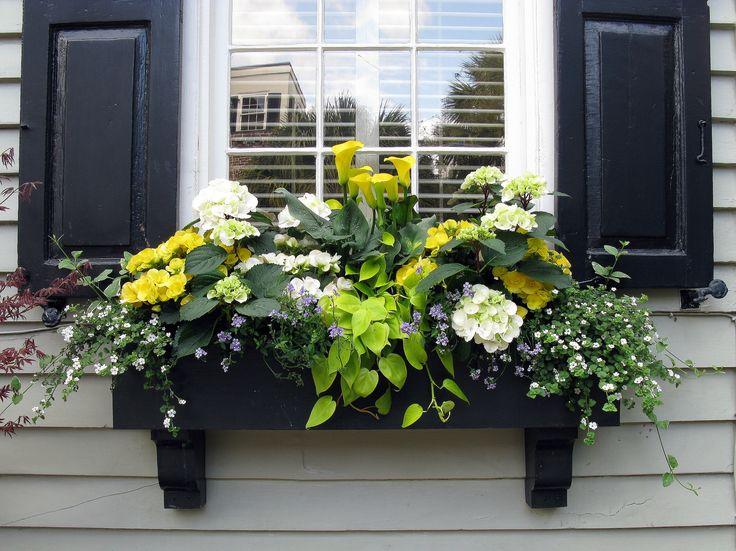 https://flic.kr/p/bT6VgB | Black window box with Black Shutters, Tradd Street, Charleston, SC