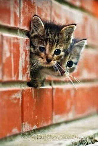 Gatito Cute