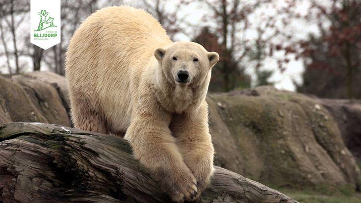 Samenvatting van Blijdorp College 'Een jaar ijsbeertjes'