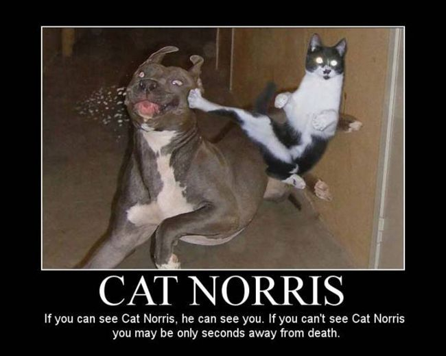 : Cats, Cat Norris, Animals, Funny Stuff, Funnies, Funny Animal, Dog